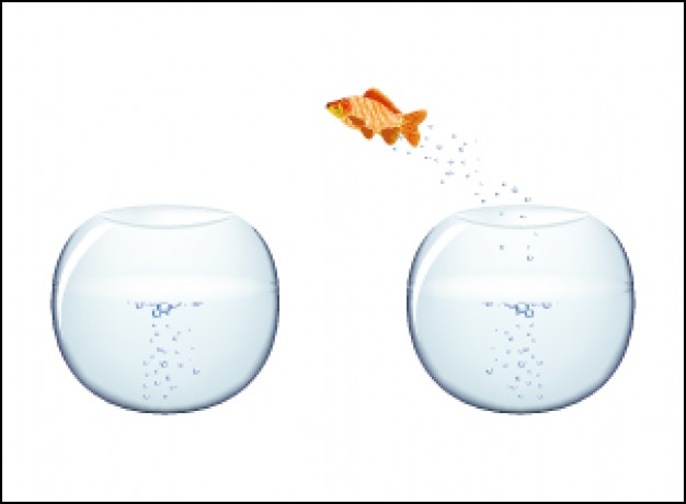 jumping goldfish from one fishbowl to another