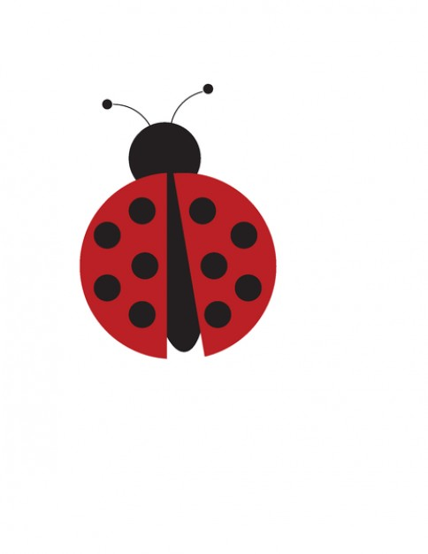 alone Persian Red ladybug vector.