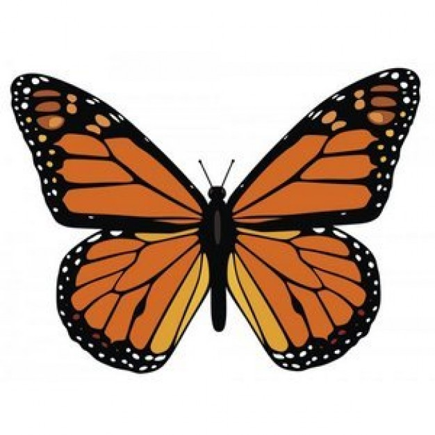 Monarch Butterfly in top view