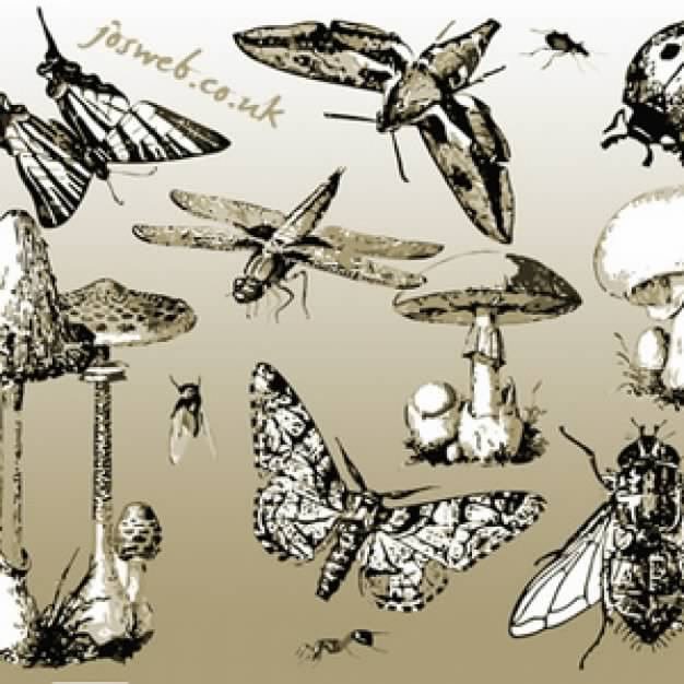 Mushrooms and variety of Insects