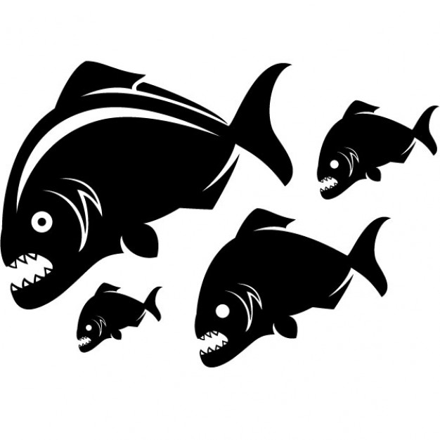 Piranhas fish vector illustration in side view