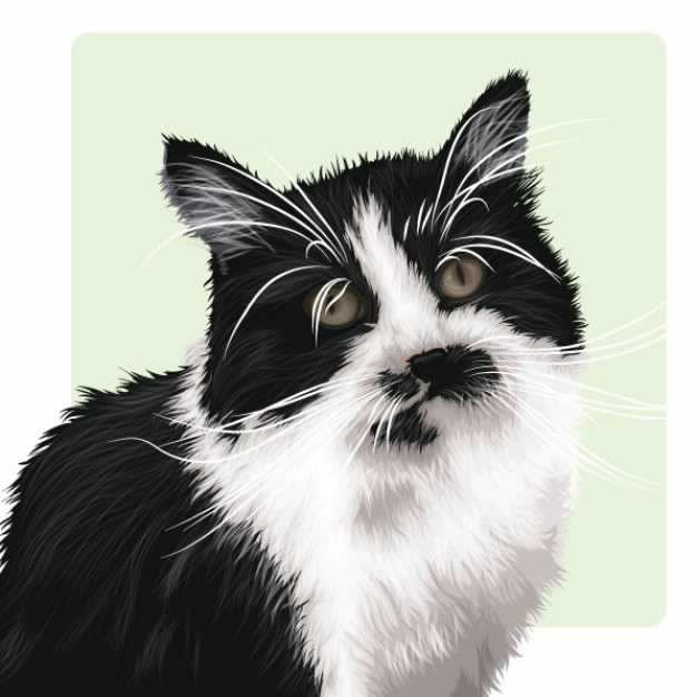 realistic black and white cat looking at you material
