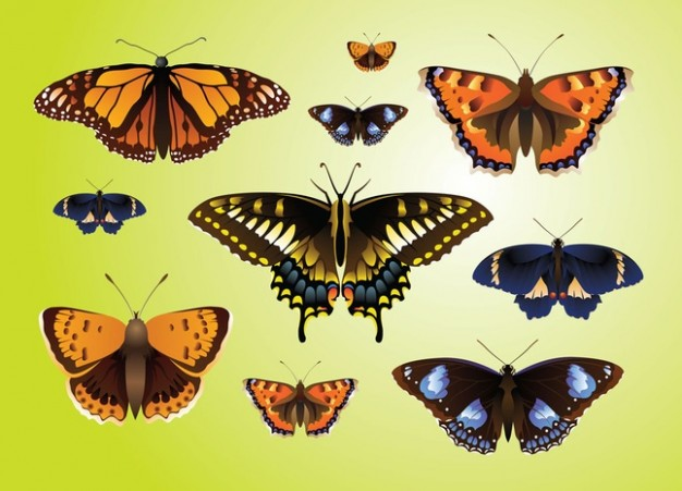 Realistic Butterfly top view Vectors over green and yellow background