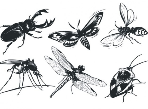 Single insect vector material including bug ladybug butterfly dragonfly