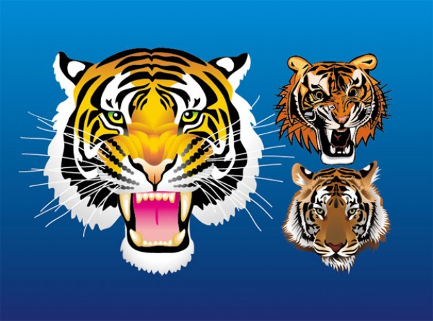 three tiger head vector material with blue background