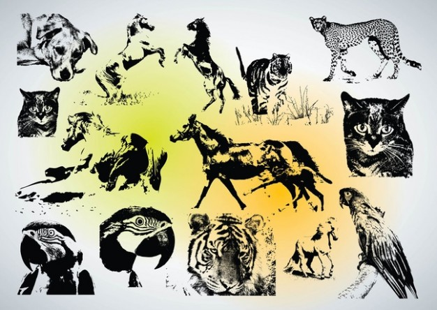 wildlife animal Animal Vectors with eagle cat tiger leopard etc