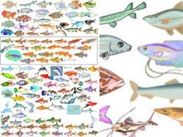 variety of fish Vector pattern in zoom out