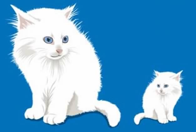 white Cats over blue background
