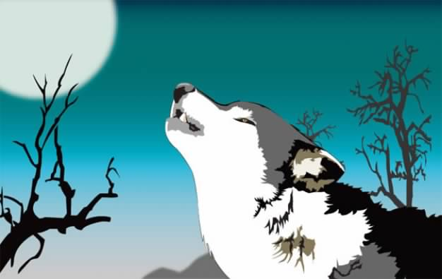 wolf Roaring under the night moon material