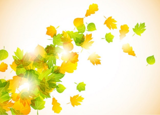 yellow and green Graphics autumn Palette (computing) fly leaves background about Image Editing Photo