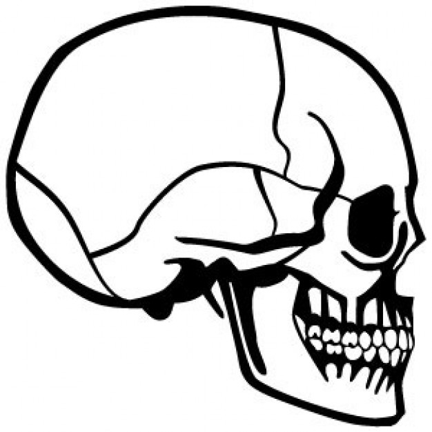 art skull Photography profile side view about Photographers Techniques and Styles