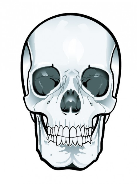 Clip art frontal Mexico skull clipart about Onavas Artificial cranial deformation