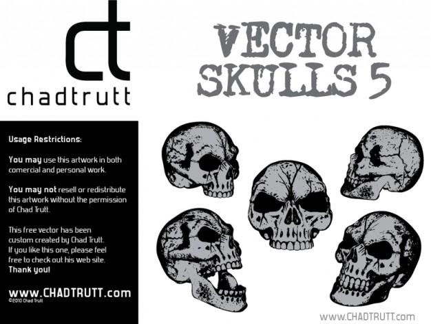 five human skulls with white background