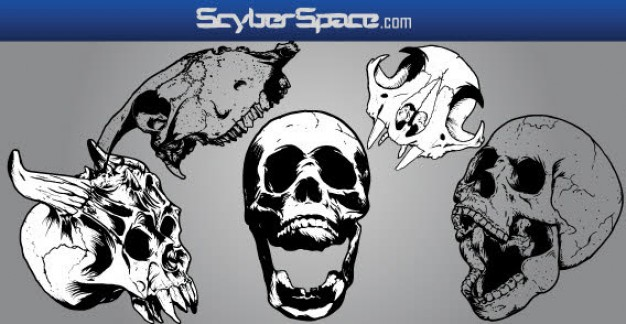 skull Arts misc with grey background about clip art