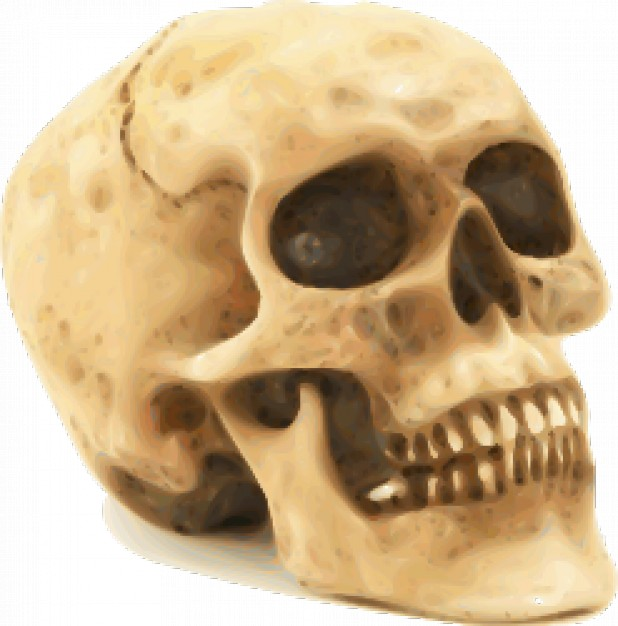 skull on a white surface