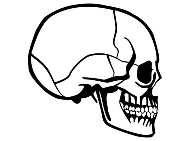 skull side view image with white background