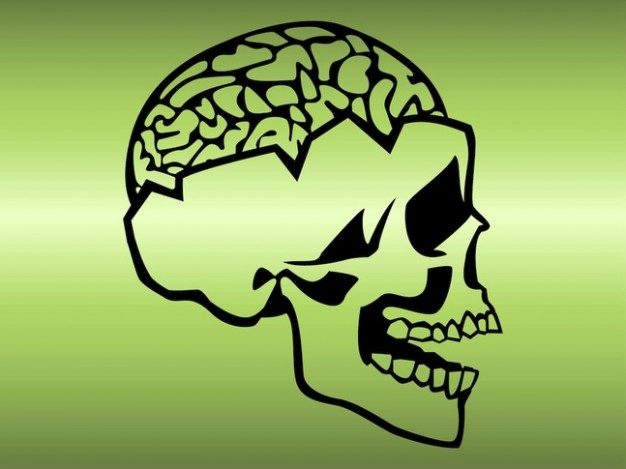 skull with brain exposed with light green background