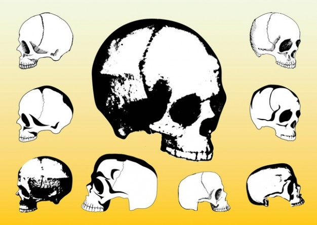 skulls side view packs with orange background